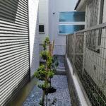 ソヨゴの植樹/東京都杉並区