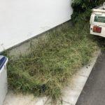 9.29 世田谷区 家前道路沿いの草刈り、除草剤散布