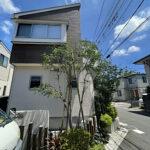 シマトネリコの剪定と支柱の付け替え/埼玉県上尾市