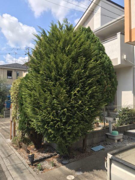 9.5 上尾市富士見 庭木伐採