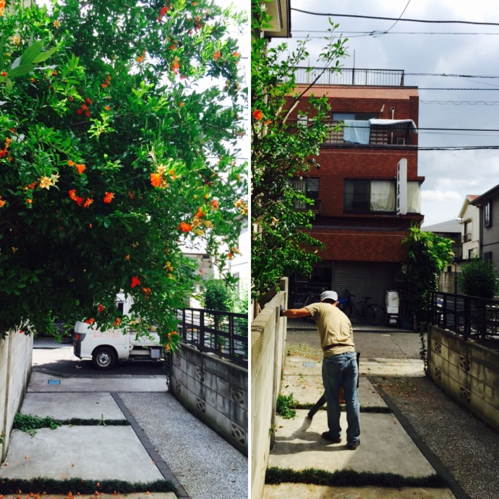 はみ出した大きな木依頼埼玉の業者はニワナショナルです。