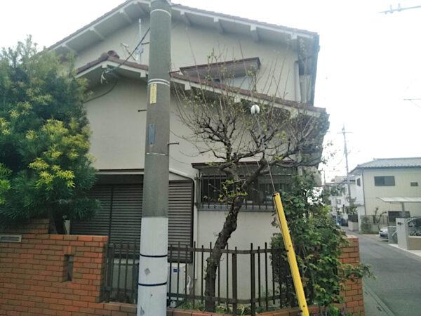 ウメ・サザンカの剪定、マキの刈り込み、枯れ木の抜根作業/埼玉県上尾市