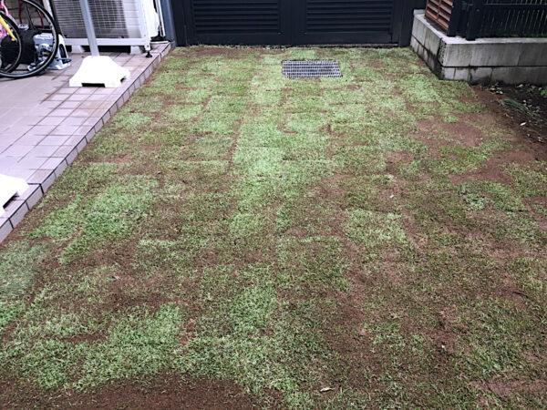 マンション専用庭の高麗芝はがし、整地、TM9張り/東京都世田谷区