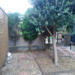 8.31 さいたま市見沼区 庭木抜根+芝剥ぎ