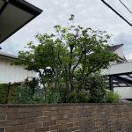 庭木の剪定、草刈り、除草剤散布、伐採作業/埼玉県上尾市