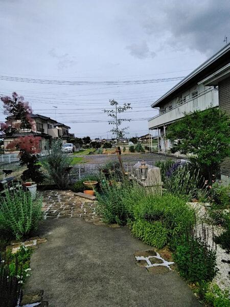 オリーブの強剪定と支柱の立て直し/埼玉県鴻巣市