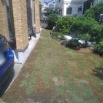 天然芝TM9(高麗芝)の芝はり/さいたま市大宮区