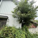 ムクノキの伐採、笹・サツキ刈込/埼玉県北本市