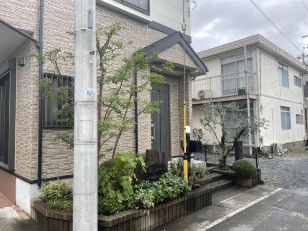 オリーブ、ヒメシャラ、ソヨゴの剪定、低木、下草の剪定/埼玉県上尾市