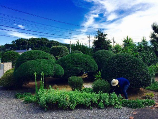 日本庭園風の植木整形お任せください!