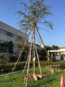 木を支えたい業者埼玉県東京都