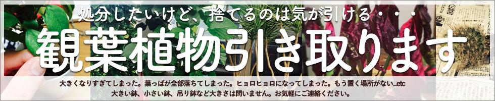 kanyouhikitori_bnr