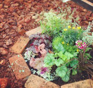 花壇に寄せ植え